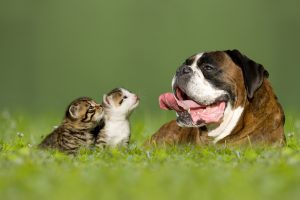 kittens, puppies and adult pets must be protected