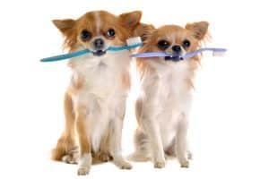 brushing pets' teeth promotes dental health