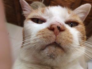cat-acne2